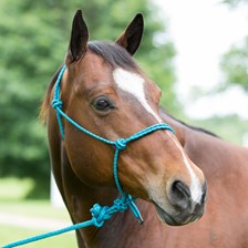Mustang Mountain Rope Halter and Lead