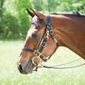 Tory Leather Combination Halter & Trail Bridle