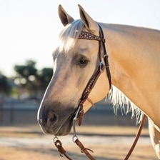 Martin Saddlery Turquoise and Copper Dots Headstall