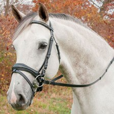 Red Barn Piaffe Dressage Bridle- Clearance!