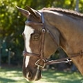 Wellfleet Hunter Bridle by SmartPak