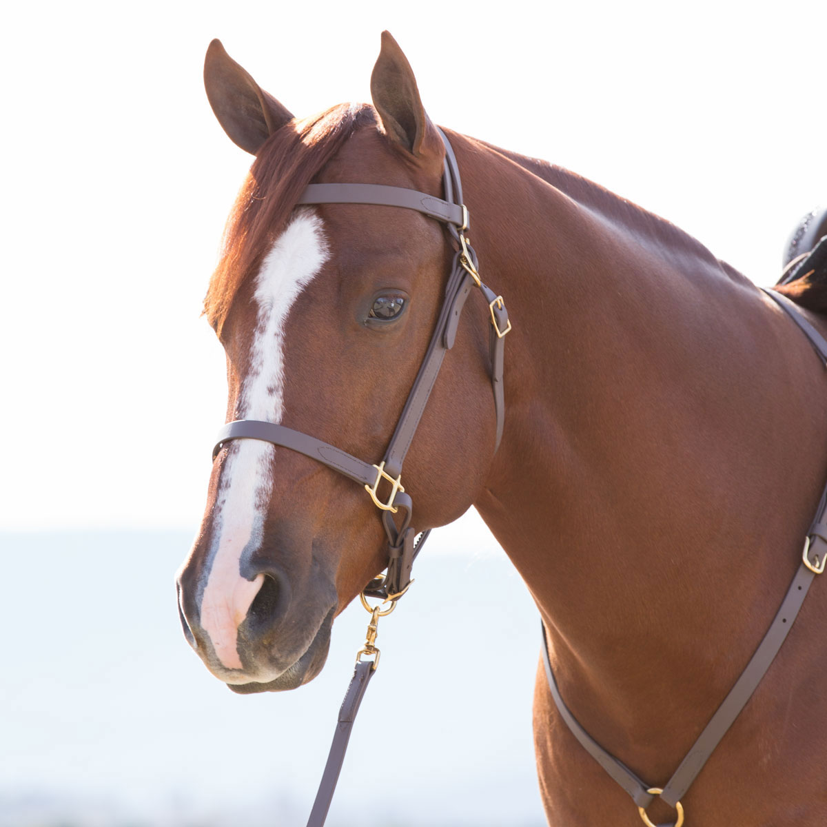 New English Bridle Halter Endurance Padded Biothene with Breast Plate Free Ship