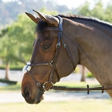Wellfleet® Figure 8 Bridle