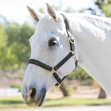 Plymouth® Halter by SmartPak