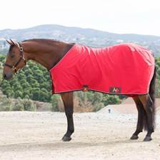 Big D Cotton Stable Sheet- Open Front