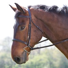 Camelot Plain Raised Padded Bridle