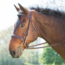 Ovation Wide Noseband Padded Bridle