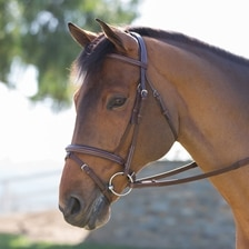 Harwich® Flash Bridle by SmartPak