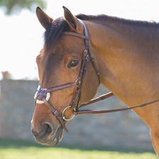 Harwich® Figure 8 Bridle by SmartPak