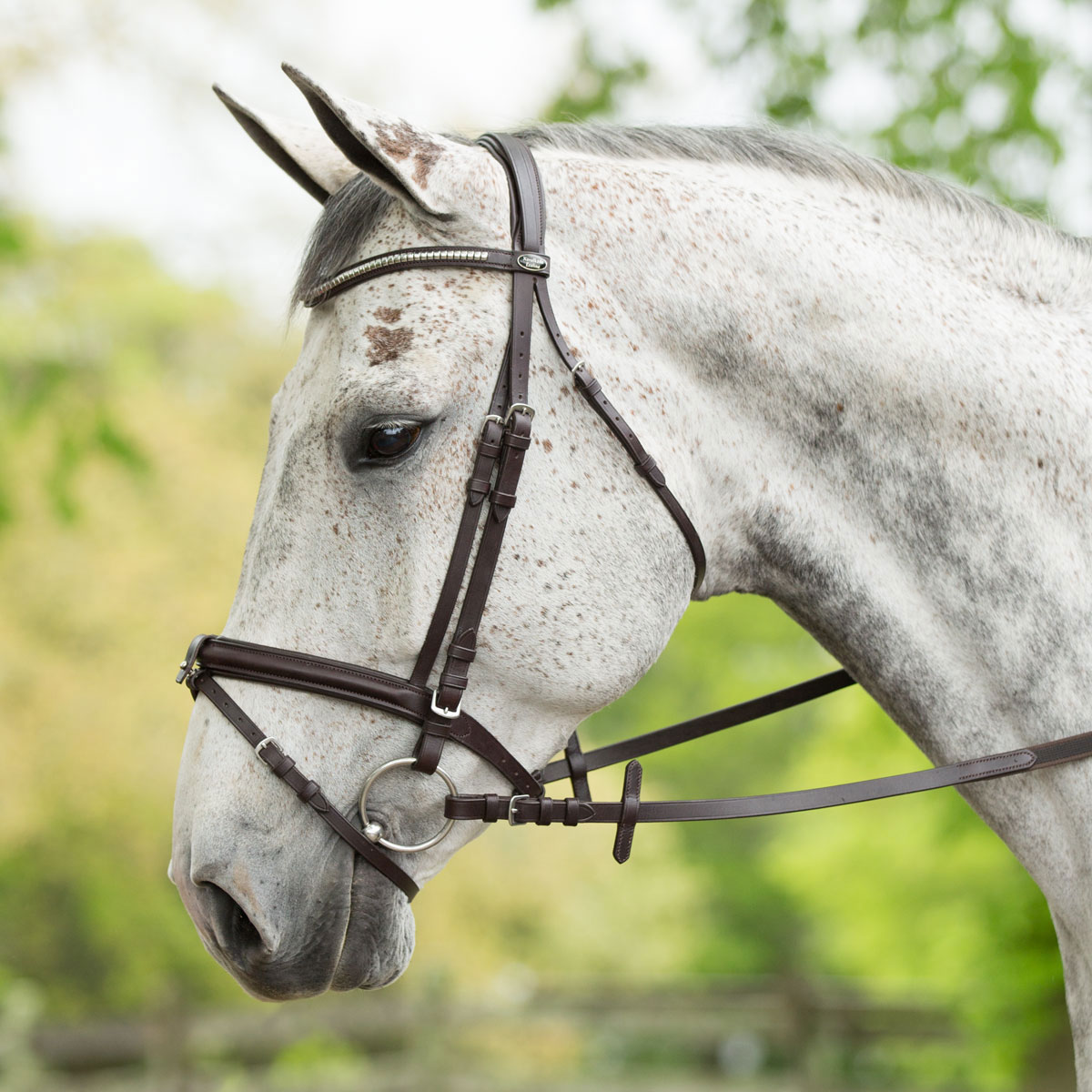 Kavalkade Angelo Clincher Bridle
