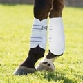 Majyk Equipe Sport/Dressage Boot