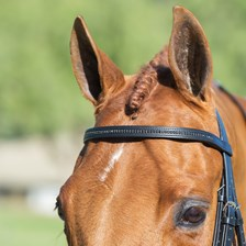 Harwich® Black Crystal Browband by SmartPak