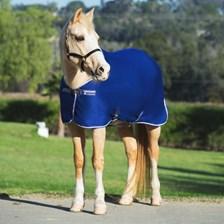 Amigo Pony Jersey Cooler