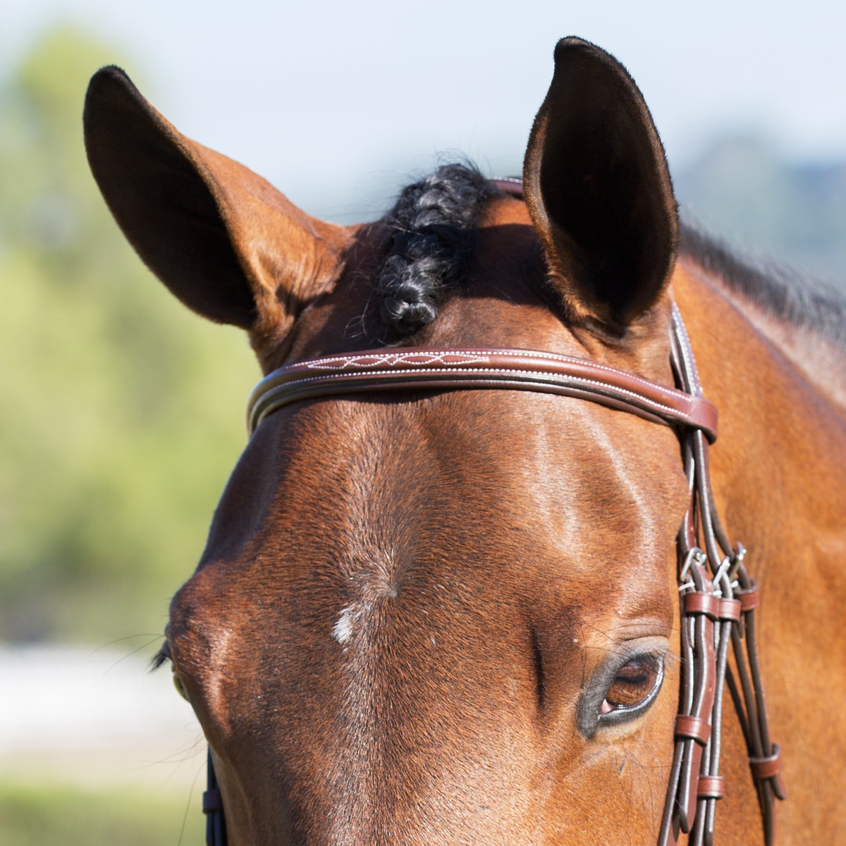 Harwich Hunter Browband By Smartpak