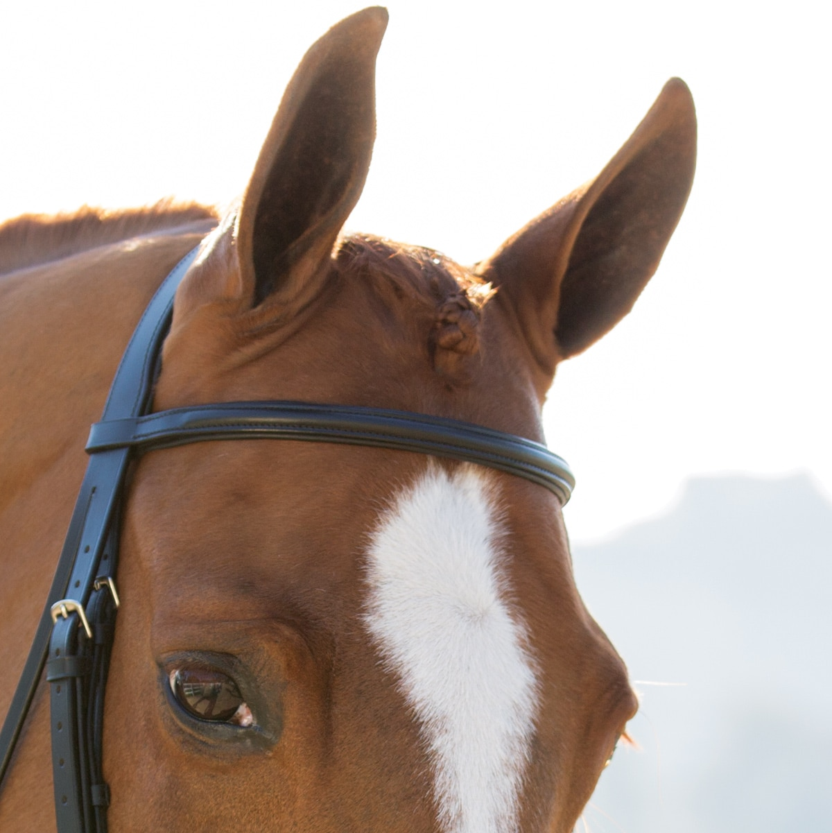 Harwich Dressage Browband By SmartPak