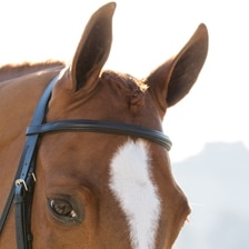Harwich® Dressage Browband By SmartPak