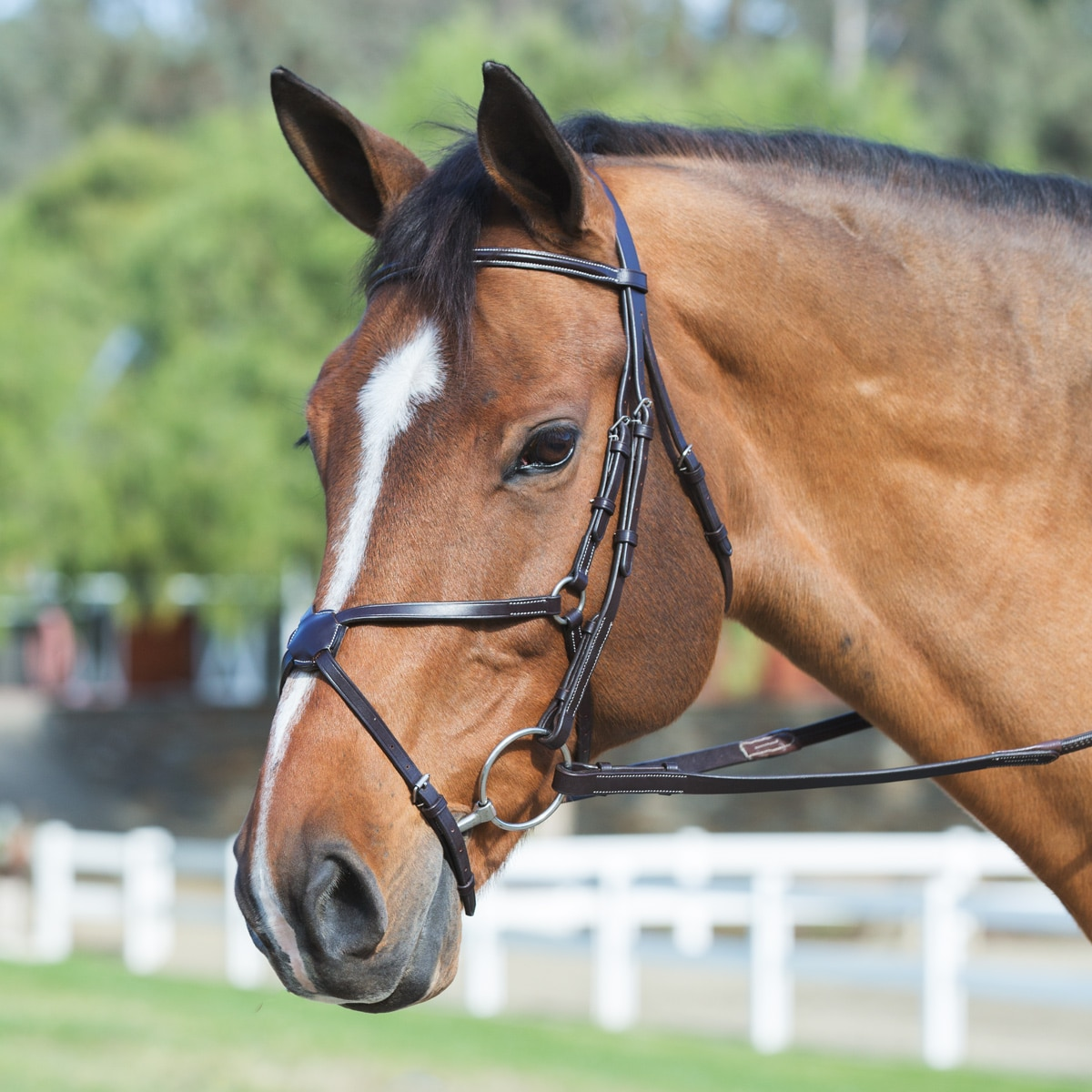 Plymouth Figure 8 Bridle by SmartPak