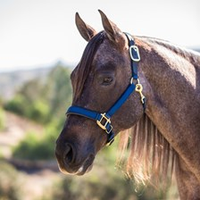 Intrepid Chafeless Padded Breakaway Halter Padded Crown and Nose