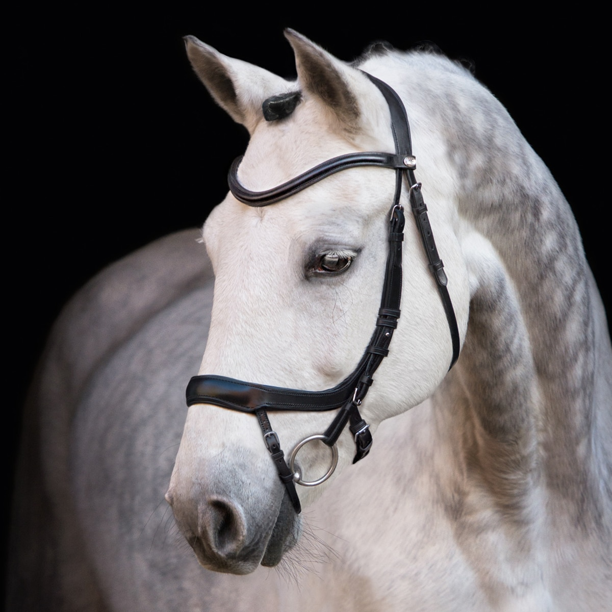 Schockemoehle Equitus Alpha Anatomical Bridle with Rubber Reins