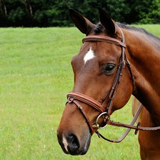 Arc de Triomphe Starman Bridle With Raised Fancy Laced Reins