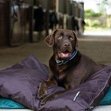 Rambo® Pillow Dog Bed