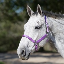 SmartPak Breakaway Halter With Neoprene Padding - Clearance!