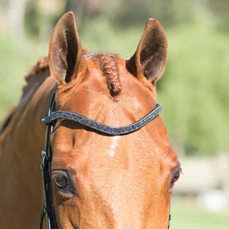 Kavalkade Button Browband- Night - Clearance!