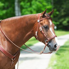 SMARTPAK EXCLUSIVE Limited Edition Dr. Cook® Bitless Bridle with FREE Holiday Bells!