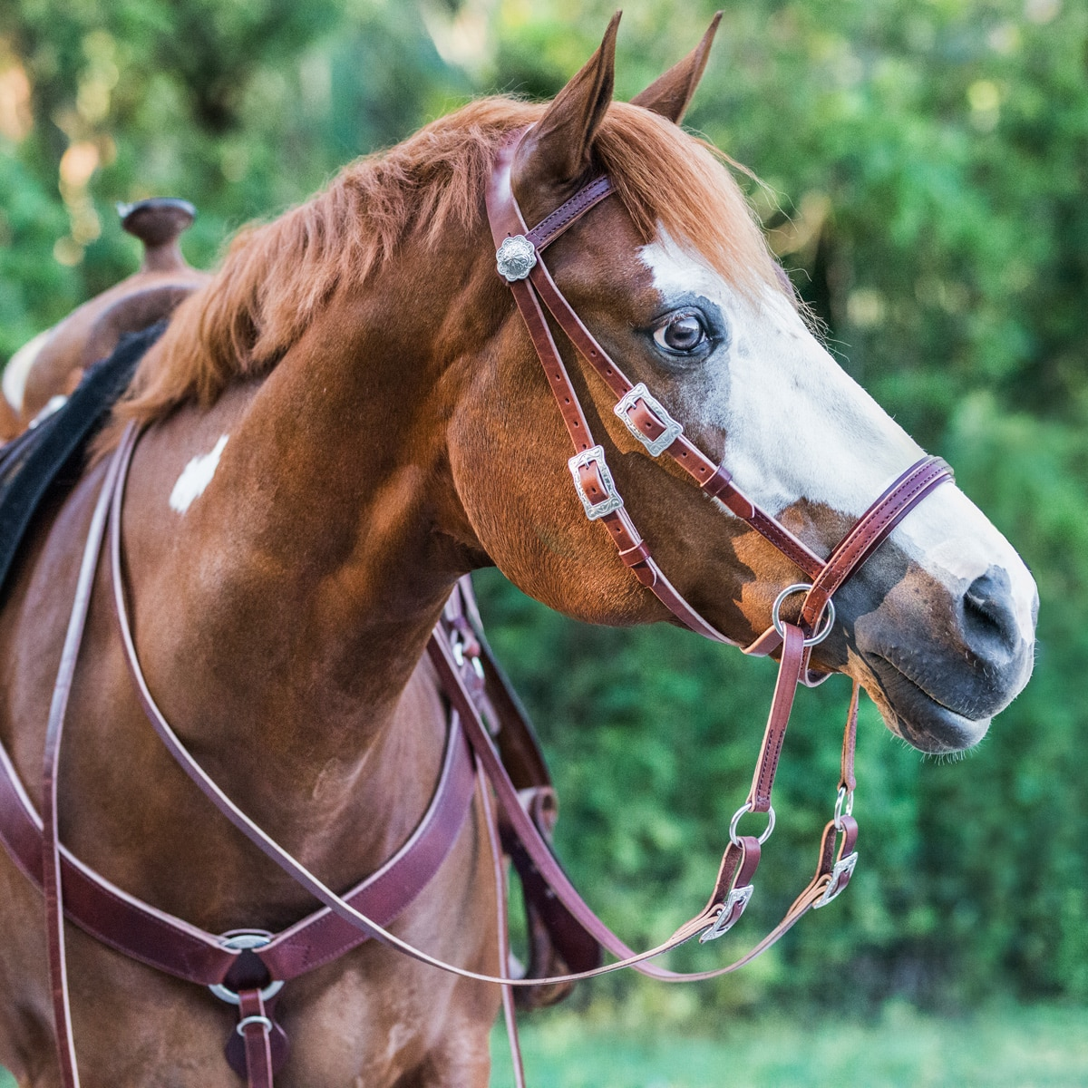 SMARTPAK EXCLUSIVE Limited Edition Dr. Cook's Bitless Bridle