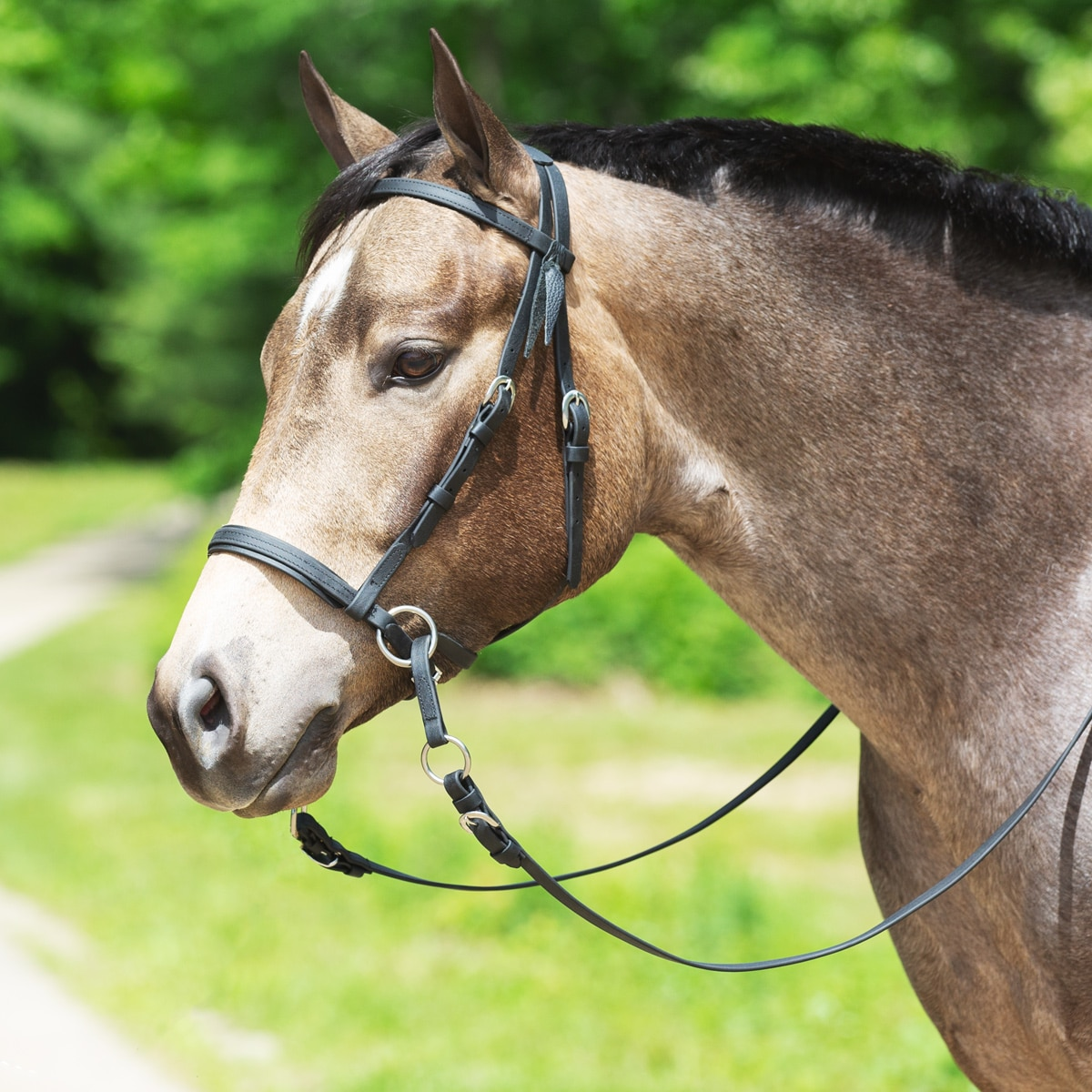 Dr. Cook® Beta Western Bitless Bridle with FREE Holiday Bells!