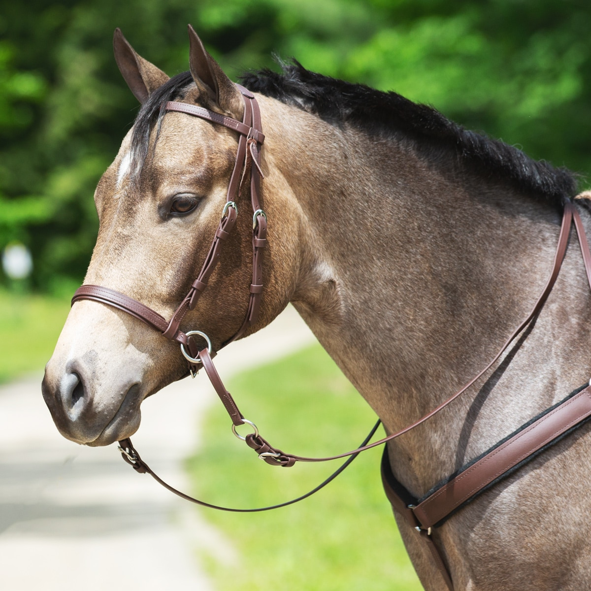 Dr  Cook® Beta Western Bitless Bridle