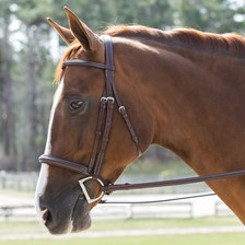 Harwich® Plain Hunter Bridle By SmartPak