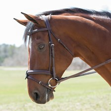 Harwich® Eventing Bridle by SmartPak