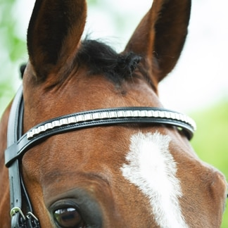 Harwich® Clincher Browband by SmartPak