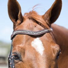 Harwich® Walnut Curved Crystal Browband by SmartPak