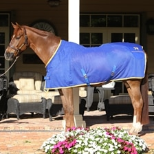 Accuhorsemat® Cooler