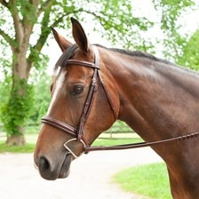 Plymouth® Wide Noseband Hunter Bridle by SmartPak