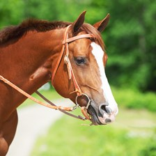 SmartPak Browband Headstall Tie End