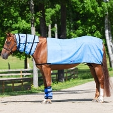 Equi Cool Down Premium Combo Set w/ FREE Cooler Bag