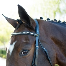 Wellfleet® Patent Clear Crystal Browband by SmartPak