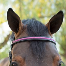 Plymouth® Glitter Browband by SmartPak