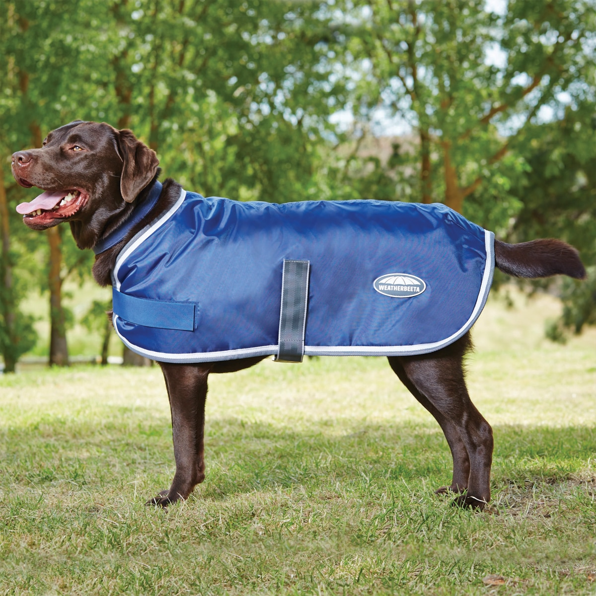 Weatherbeeta 400d Windbreaker Dog Coat