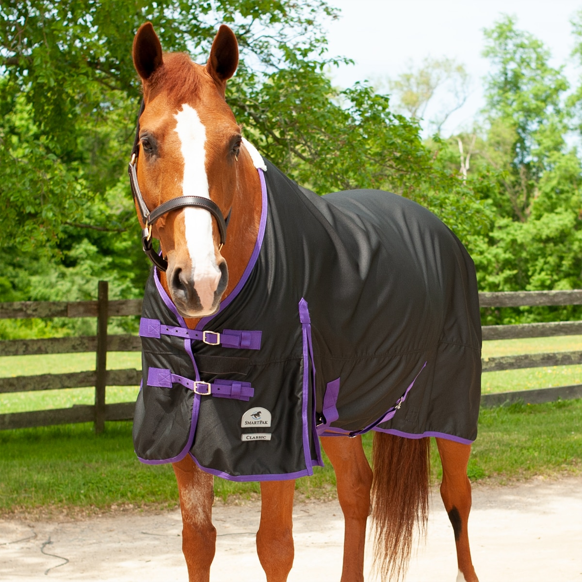 Horse Show//Paddock Lightweight Breathable Summer Combo Rug