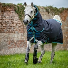 Amigo Bravo 12 Plus - Pony