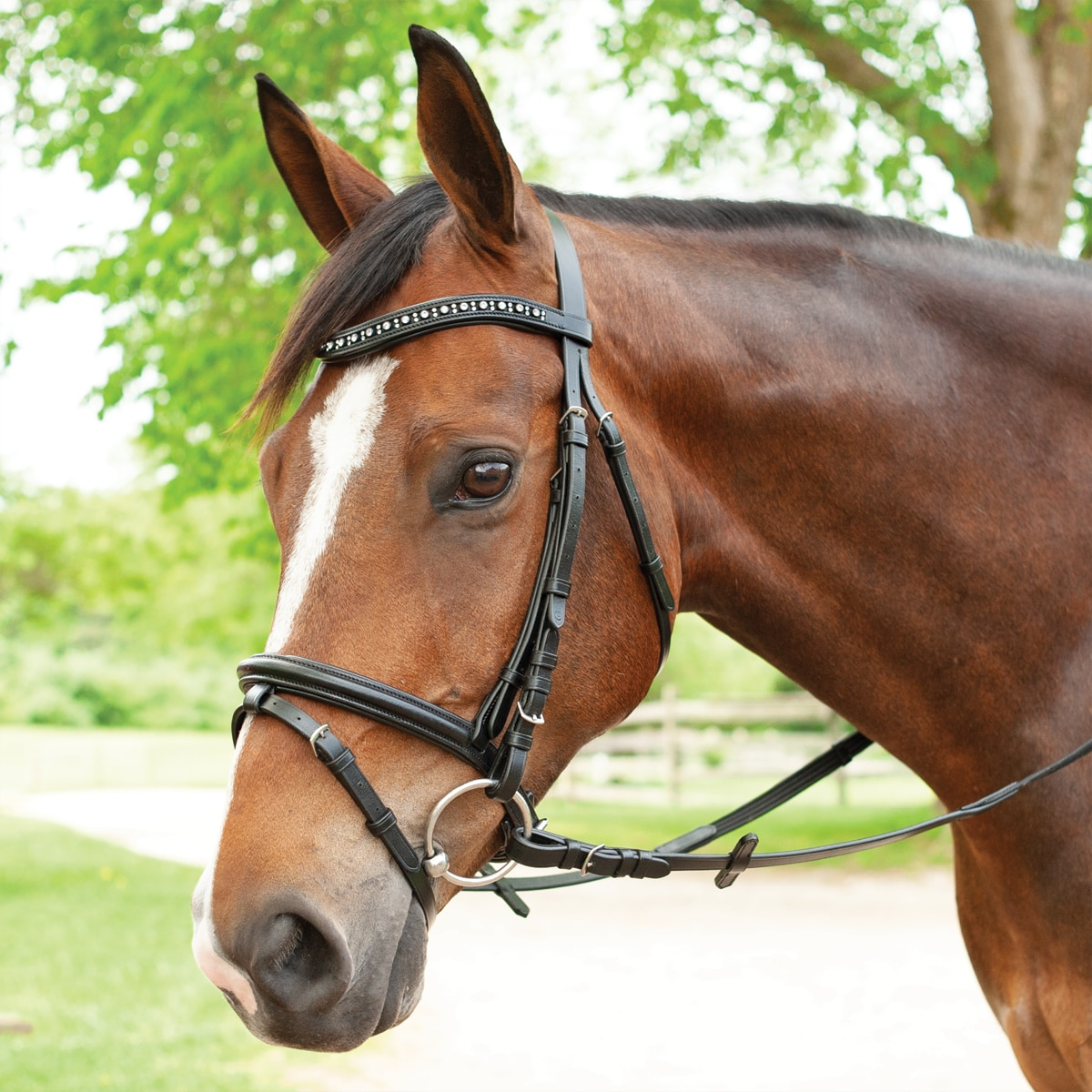 Plymouth Bling Dressage Bridle By Smartpak