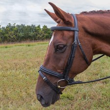 Vespucci Dressage Double Raised Snaffle Bridle