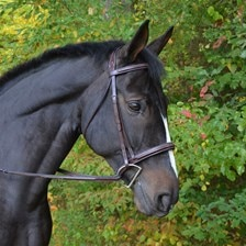Black Oak Cyprus Bridle