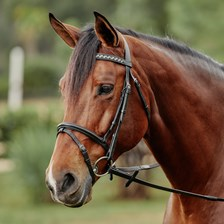 Plymouth® Checkered Stone Dressage Bridle