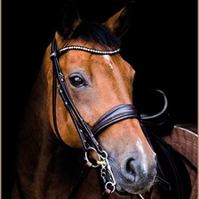 Stubben Switch Bridle with Magic Tack Brow Band
