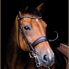 Stubben Swtich Bridle with Magic Tack Brow Band